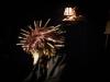 davidpommier-cielilou-147bd-Spectacle à partir de 5 ans